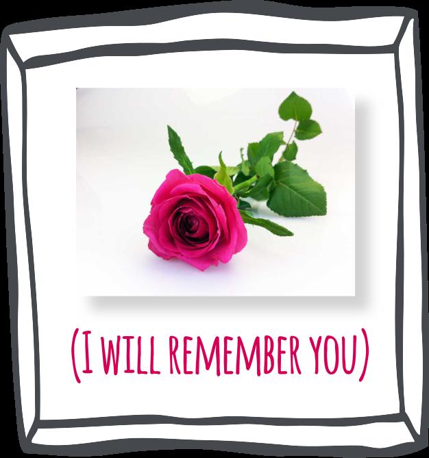 conservare_rose